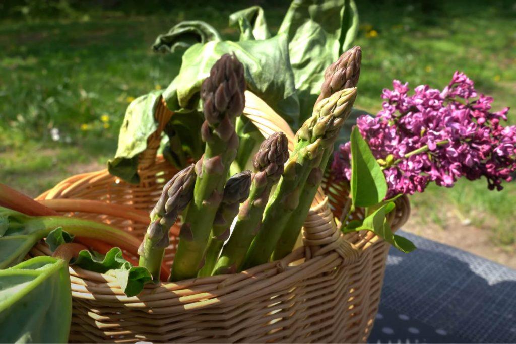 dieteticienne-legumes-avril-metz-perte-de-poids